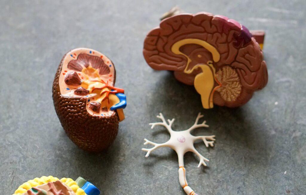 TCA Les troubles du comportement alimentaires